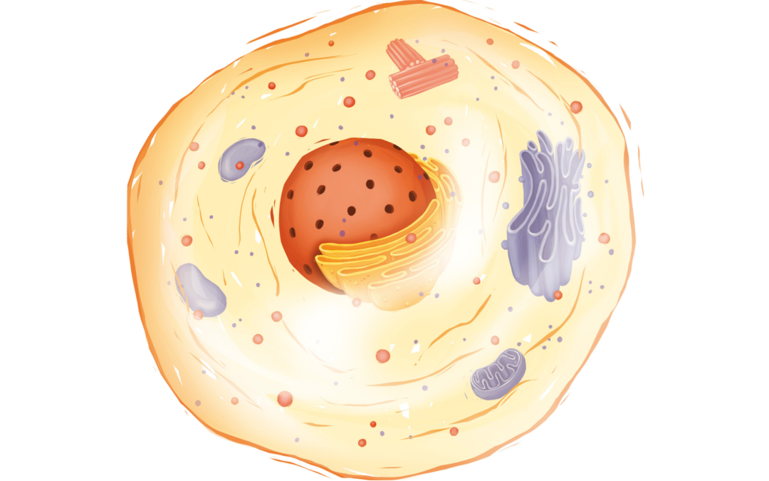 Mitochondrien – Die Kraftwerke unseres Körpers